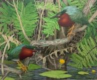 John-Furches-tropic-birds