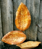 Two-Creeks-Pottery-tobacco-leaves