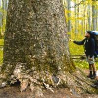 Joyce Kilmer Memorial Forest Thumbnail