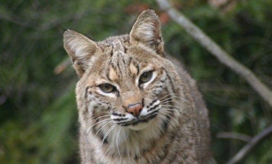 Western North Carolina Nature Center Thumbnail