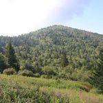 Mt. Hardy