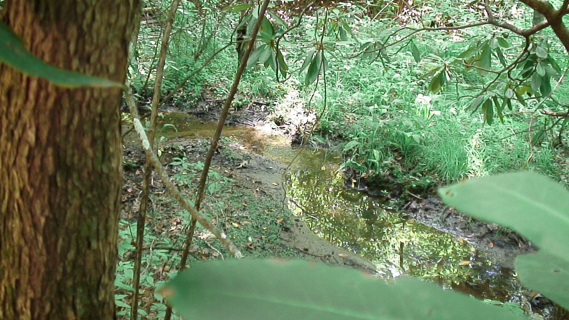 Nantahala River Bogs Thumbnail