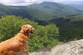 dog on the Blue Ridge Parkway