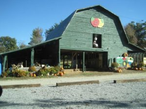 Stepp Hillcrest Orchard